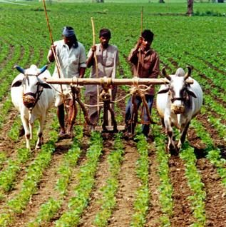 Traditional Agricultural Production Techniques - Indian Geography